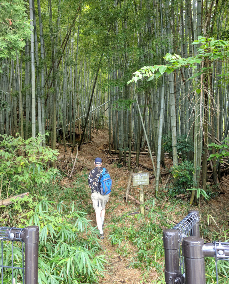 Bamboo forest on the Nara Michi trail