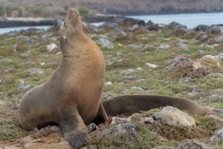 Sea Lion 6