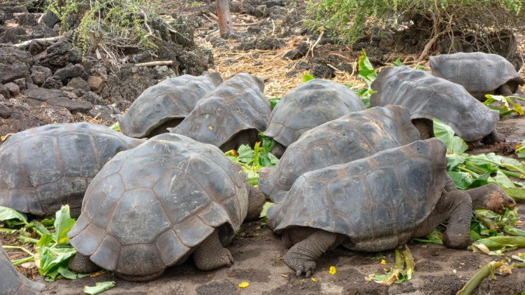 tortoises - feeding