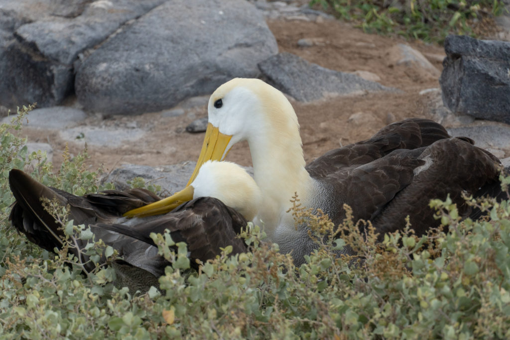 wave albatrosses 2